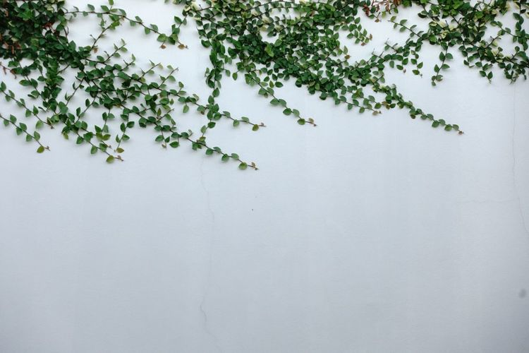 Close-up of tree against white wall