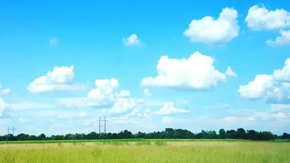 Tranquil Scene Grass Beauty In Nature Day Outdoors No People Beautiful Day Louisianaphotography Louisiana Skies Eye Of Ky Louisiana Lovely Louisiana Nature Drivingshots Highwayphotography Highway 90 Louisiana Beauty In Nature