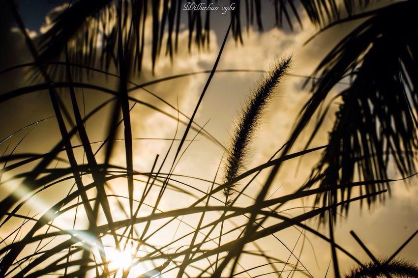 Aurore Aurora Aurore Fwi First Eyeem Photo Nikonphotography Antilles Urbanvybz Guadeloupe Caribbean Beautiful TheWeekOnEyeEM Nikon 971 Paysage Sun Sunset Sunshine Gwada