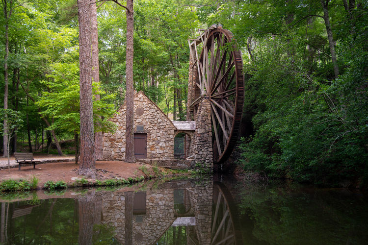 Watermill reflecting on calm pond in forest