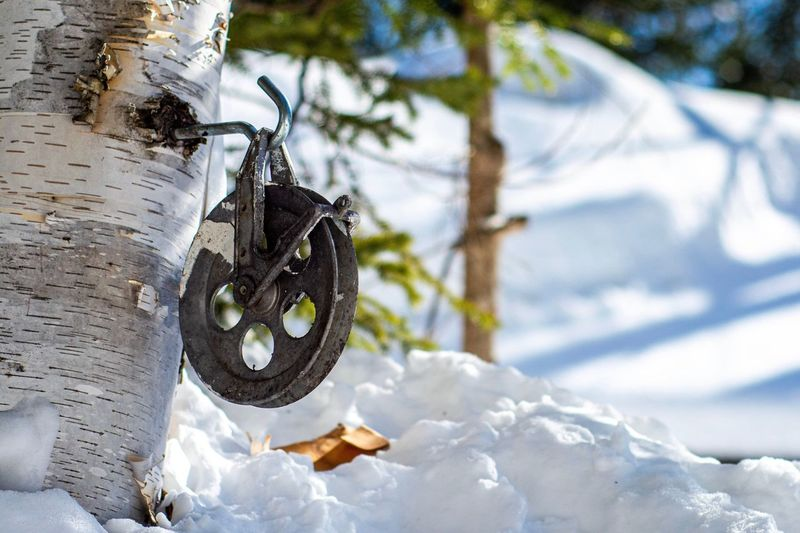 Low angle view of chain hanging on tree