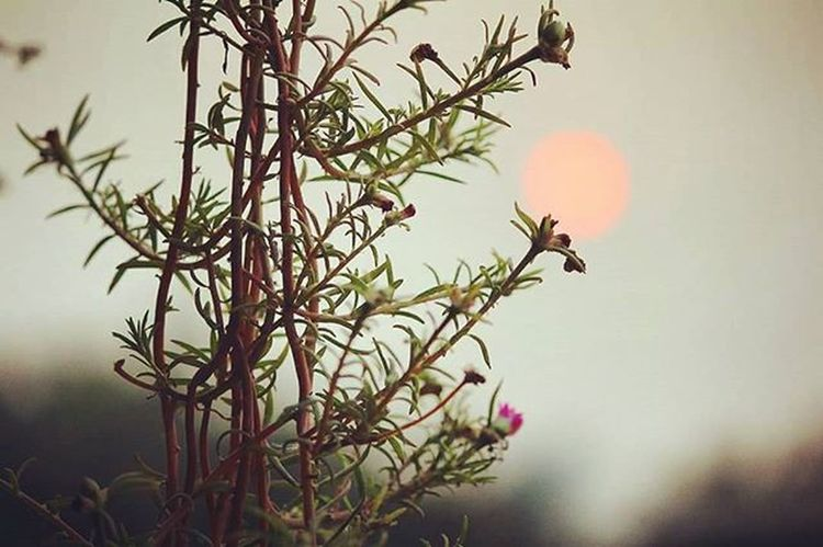 There are always flowers for those who want to see them ! Flowers Sunset Sunday November Natgeoit 1stclick Mesmerized
