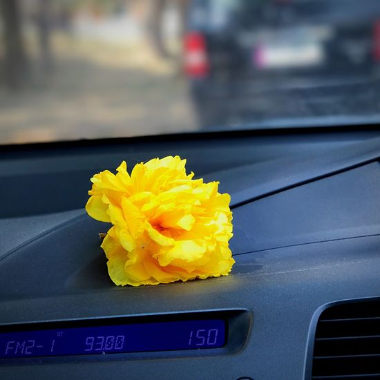 Driving With My Eyes Yellow Flower Car Mode Of Transport Flower Head Transportation Land Vehicle No People Fragility Close-up Day Outdoors Nature Freshness Beauty In Nature Driving Around Drive By Shooting Transportation Go Go Go ! Good Weekend Goodafternoon Good Afternoon! Magazine