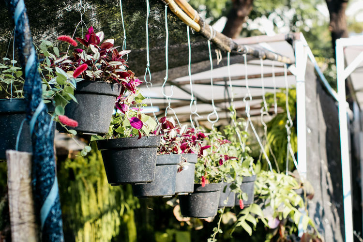 Close-up of potted plants hanging on fence