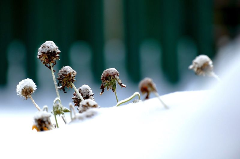 Nature Growth No People Flower Close-up Plant Outdoors Day Beauty In Nature Fragility Winter Snow Focus On Foreground