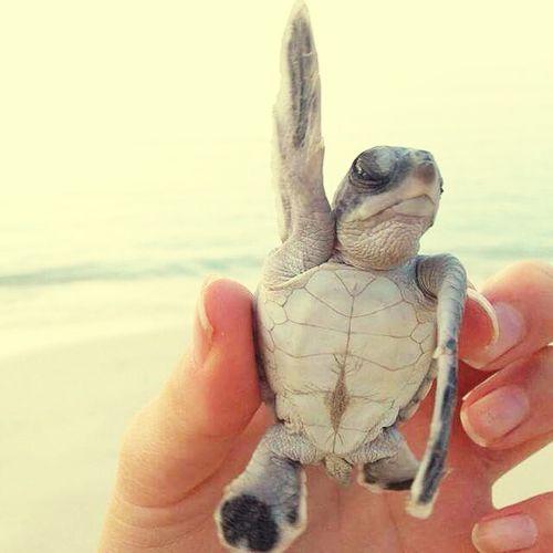 True Love! Tartaruga *--*