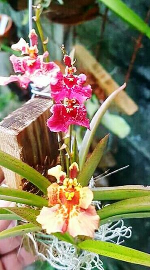 Growth Plant Nature Flower Outdoors Beauty In Nature