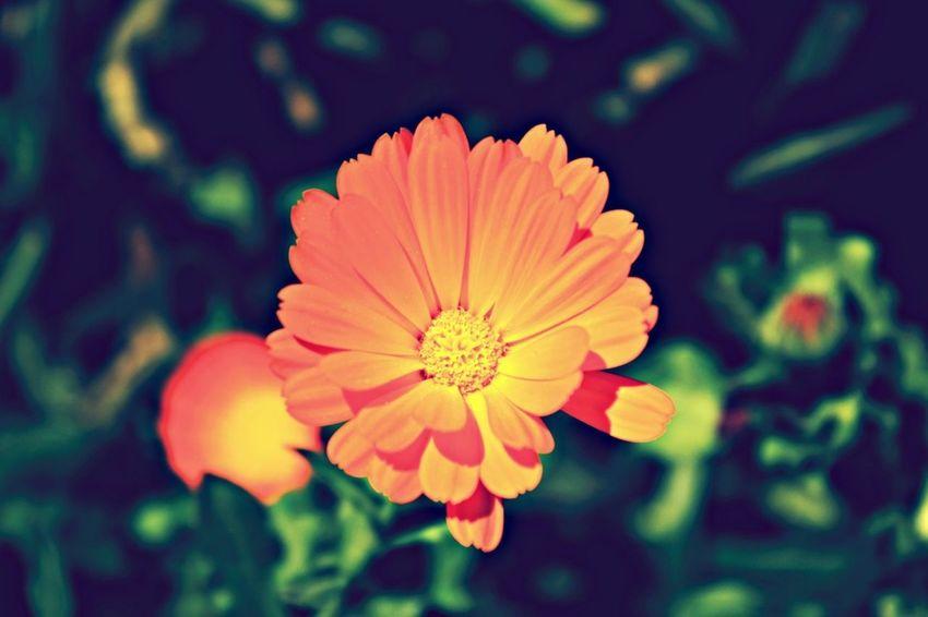 Enjoying Life Flowerporn Bisgen EyeEm Best Shots