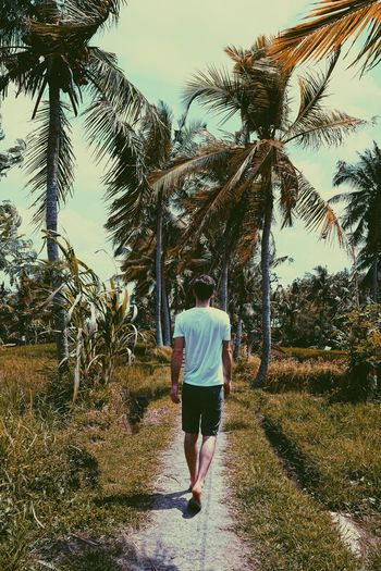 Palm Tree Jungle Ubud Bali Vacations Holiday Travelphotography Travel Photography Real People Full Length Rear View Plant One Person Walking Nature Tree Sky Lifestyles Casual Clothing Leisure Activity Day Growth Sunlight Adult Outdoors Men Shorts