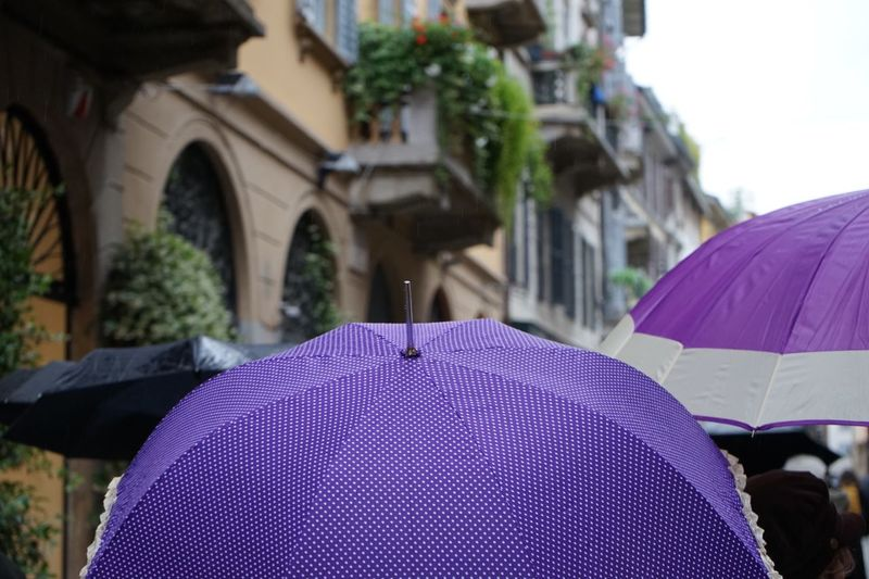 Close-up of wet purple umbrella