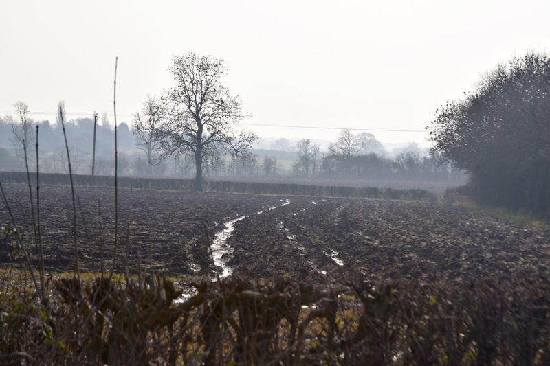 Relaxing Taking Photos Field Furrows Trees Countryside Uk Shadows Country Shots Contrast Mist Nikond3300