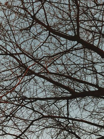 Backgrounds Low Angle View Full Frame No People Day Bare Tree Outdoors