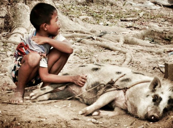 Child Pet Pig People Watching Poverty Simple Beauty Happy Place Take Note Consumerism Consumption  Rich VS Poor Rich In Sand Dollars Telling Stories Differently Showing Imperfection EyeEm Thailand Natures Diversities