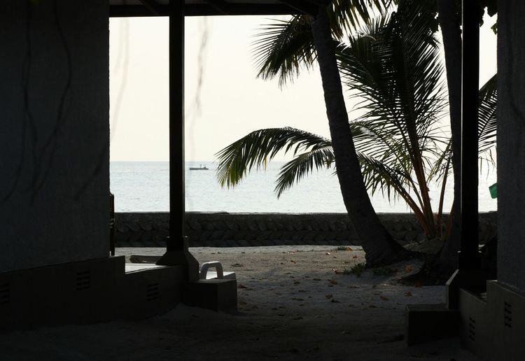 Darkness And Light Maldives Resort Palm Trees Sand Sea View