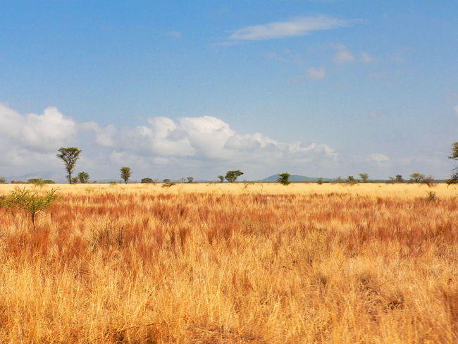 Shaba National Reserve in Northern Kenya Kenya National Park The Week On EyeEm Africa Beauty In Nature Day Field Grass Growth Landscape Nature No People Outdoors Safari Scenics Sky Tranquil Scene Tranquility Travel Destinations Tree Perspectives On Nature