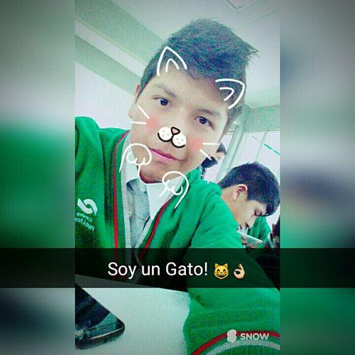 Soy un Gato! 😸 First Eyeem Photo
