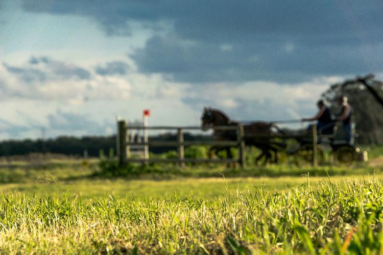 Horse ride Companhiadaslezirias Grass Horse Horse Trials Landscape Landscape_Collection Outdoors Portugal Ribatejo Ribatejoalive