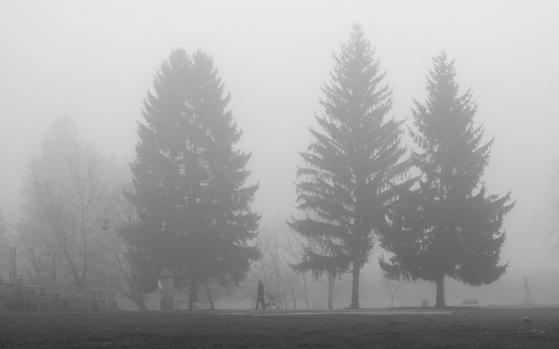 Pine trees on field during winter