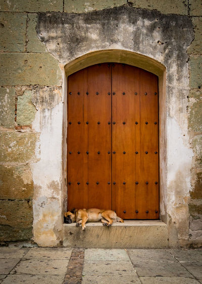 Lazy Dog Door Architecture Building Building Exterior Built Structure Closed Day Dog Domestic Door Entrance Outdoors Sleeping Stone Wall