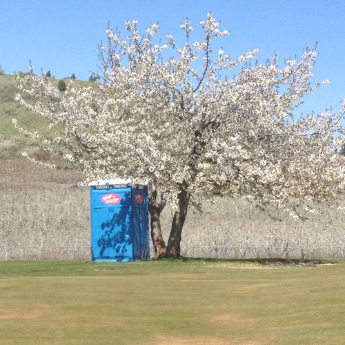 Blooming Blooming Tree Blossoms  Ironic View Outhouse Season  Spring Sunny Tranquil Scene Tree Unique Fragrant Creative Photography Showcase: December Scenery Shots Scene Rural Scenes Wenatchee, Washington EyeEm Around The World Lost In The Landscape