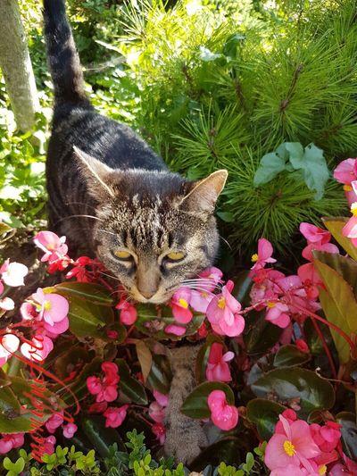 """""""s'Trämpele"""" an seinem neuen Zu Hause. 💕💗 Miezekatze Mieze Katze Katzen 💜 Domestic Cat Cat Süss Herzig"""
