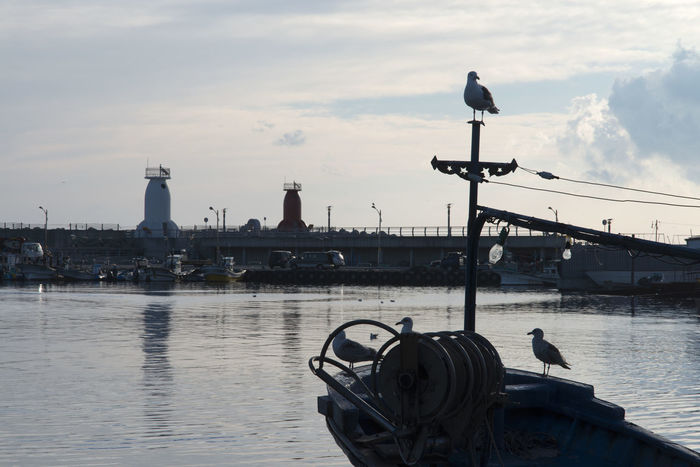 Morning view of Ayajin which is the port in Goseong, Gangwondo, South Korea Animal Wildlife Ayajin Bird Birds City Day Lighthouse Morning Nautical Vessel No People Outdoors Perching Relax Resting Sea Seagull Seaside Seawall Sky Waiting Watching Water