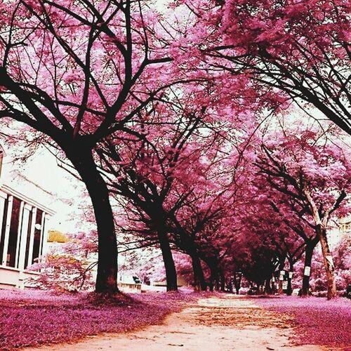 Walking Around Excercising Hugging A Tree Relaxing Escaping Examseason Gardening