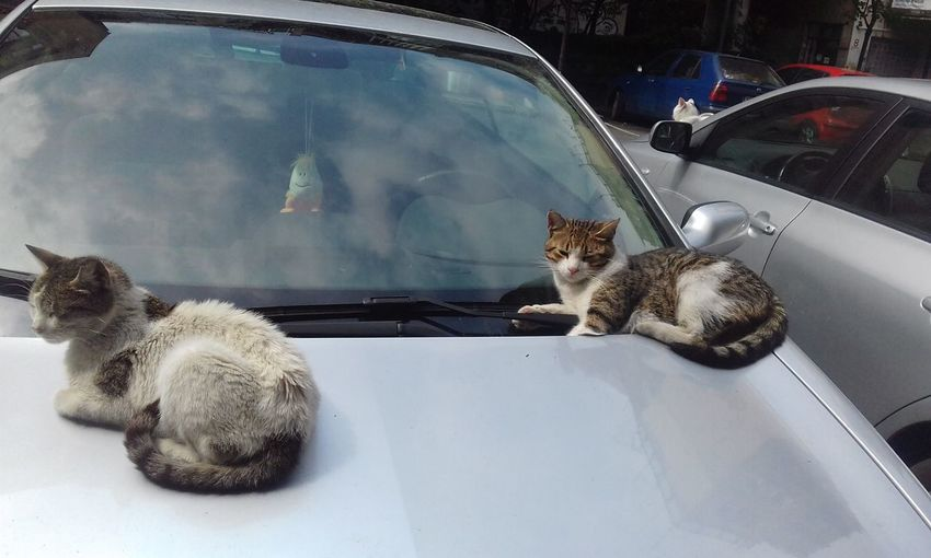 Animal Themes Car Cat Catlover Cats After Rain Cats And The Car Cats Sitting Day Domestic Animals Domestic Cat Feline Felines Indoors  Land Vehicle Mammal Mode Of Transport Nature No People One Animal Pets Sitting Streetcats Transportation Two Cats Urban Cats