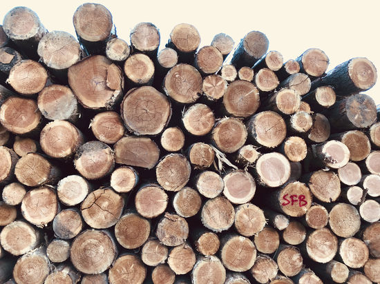 Abundance Circle Deforestation Environmental Issues Firewood Forest Fuel And Power Generation Heap Large Group Of Objects Log Lumber Industry Nature No People Pattern Shape Stack Timber Tree Wood Wood - Material Woodpile
