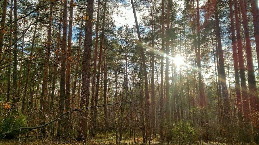 Russia Nature Wildlife Ryazan