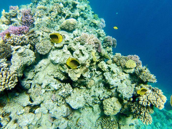 Corals UnderSea