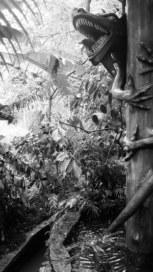 Dragon Tree No