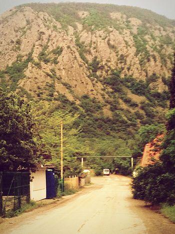 Mountain Road Day Tree