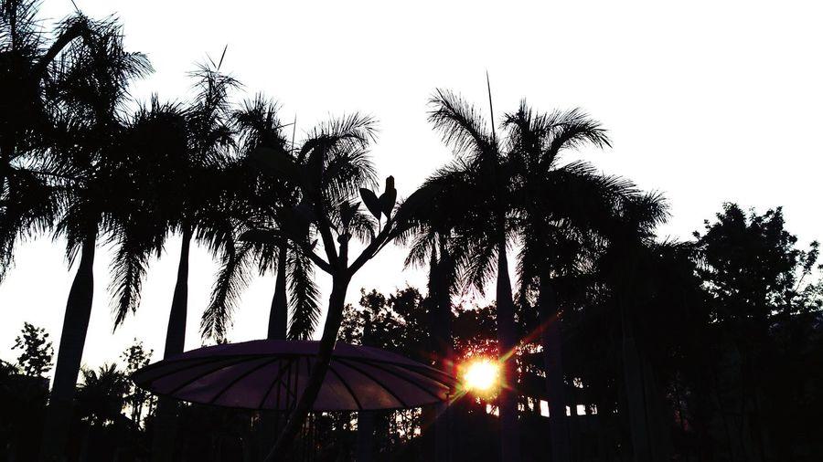 Sunset trees!!