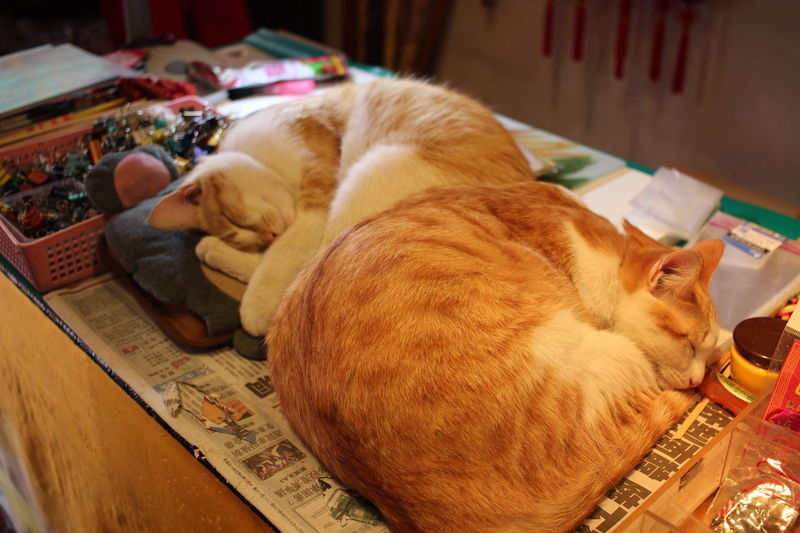 Changhua, Taiwan Lukang Old Street Animal Themes Cat Cat Lovers Cats Close-up Domestic Animals Domestic Cat Indoors  Lying Down Mammal No People Pets Relaxation Sleeping