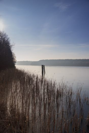 Water Nature Beauty In Nature Sky Lake Outdoors Landscape Winter See Wald Wood Himmel