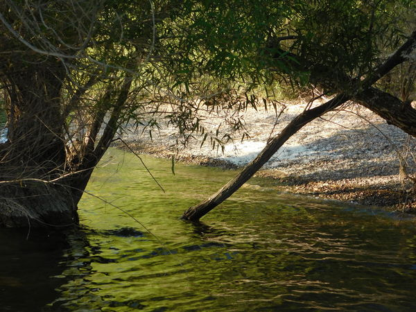 Beauty In Nature Cottonwood Cove Az Cottonwood Trees Lake Nature Outdoors Tranquility Tree Water Waterfront