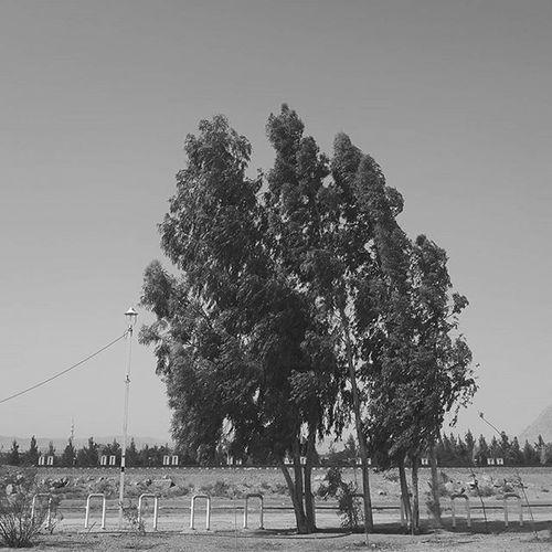 . چه جمعه های غریبی که بی تو سر کردم چه سالهای جوانی که بیثمر کردم تو گر گذشت کنی من دوباره آمده ام که توبه کردم و از معصیت حذر کردم محمد_قربان_نژاد . . . . . درخت سکوت ریل قم ایران سیاه_سفید Bnw Bnw_life Bnw_city Bnw_tree Tree Nature Natural
