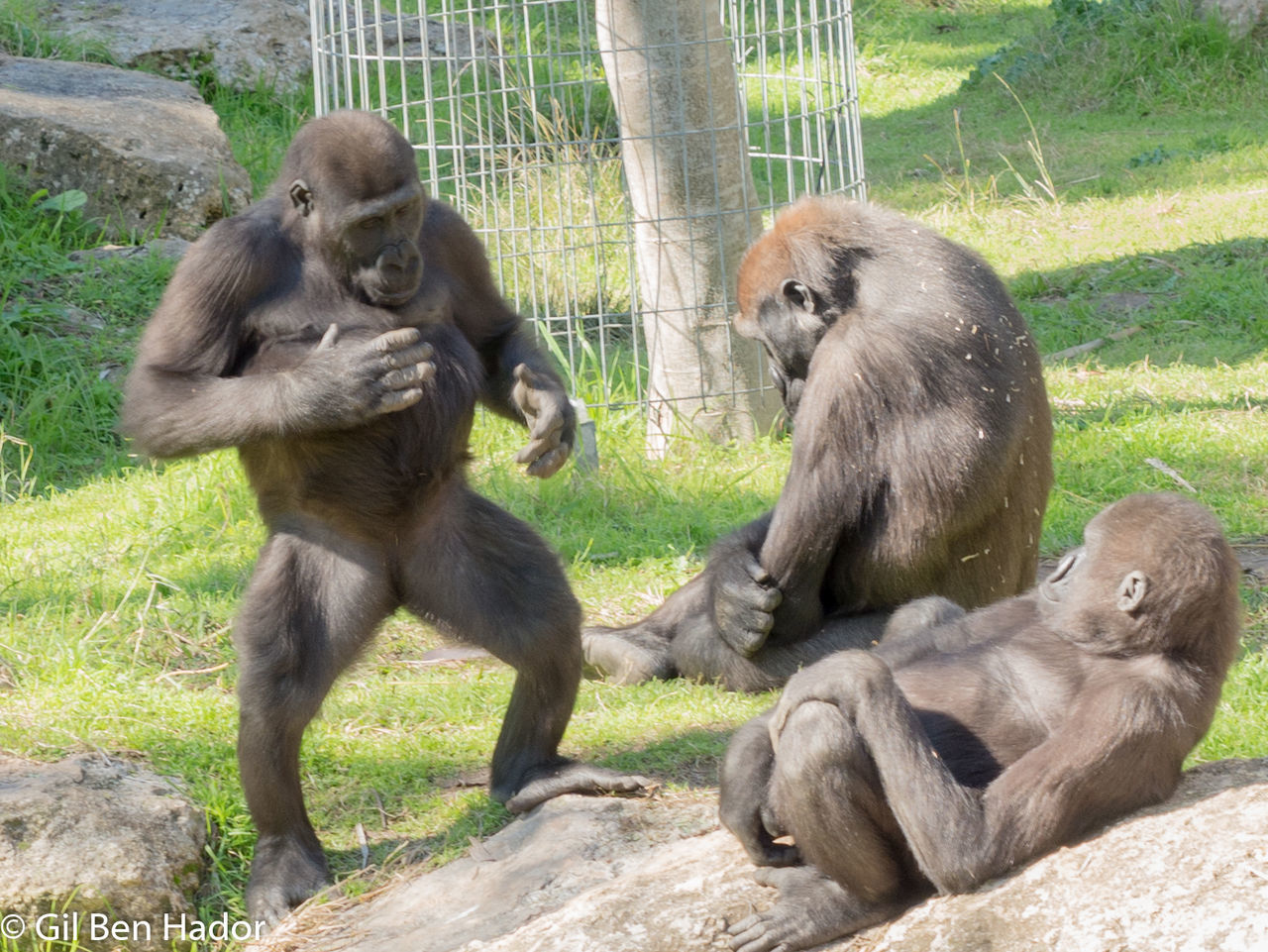 animals in the wild, monkey, animal wildlife, primate, two animals, ape, zoo, mammal, animal themes, young animal, baboon, outdoors, day, no people, togetherness, full length, sitting, nature