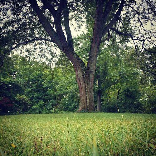 Nice old tree Lenapepark Perkasie Park Trees Trees Green Haveyouhuggedatreetoday Arbor Majestic Old Sturdy Grandoldtree Pennsylvania Fall Leavesarestillgreen
