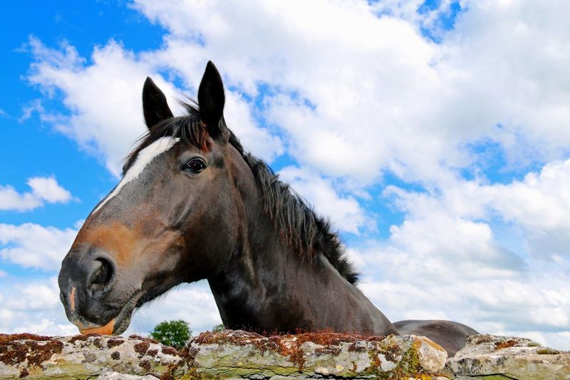 Happy Horse Cloud - Sky Sky One Animal Animal Themes Day Outdoors Nature Mammal No People Low Angle View Beauty In Nature Domestic Animals Horse Horse Photography  Equine Equestrian Farm Cotswolds Countryside Springtime Rural EyeEmNewHere Close-up Happy Animal Portrait