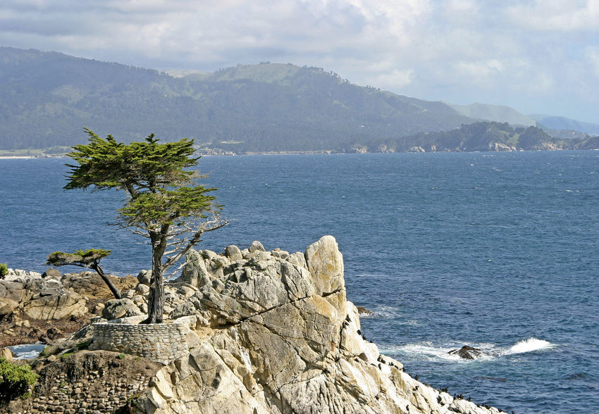 California Coast Beauty In Nature Carmel-by-the-sea Day Mountain Mountain Range Nature No People Outdoors Rock - Object Scenics Sea Sky Tranquil Scene Tranquility Tree Water California Dreamin