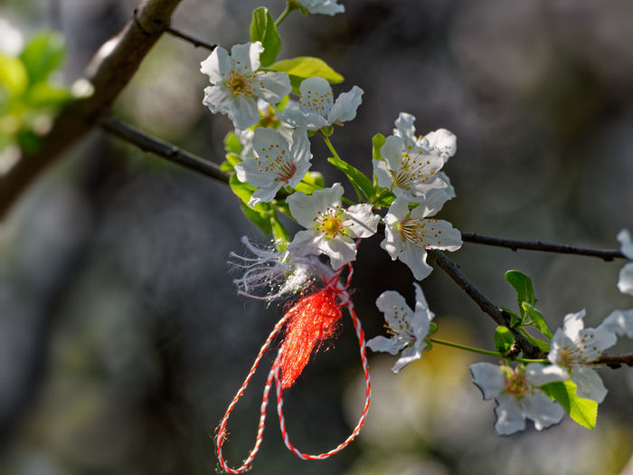 Plant Growth Flower Flowering Plant Freshness Beauty In Nature Fragility Vulnerability  Close-up Nature Focus On Foreground Day No People Red Branch Tree Outdoors Selective Focus Twig Animal Springtime Flower Head