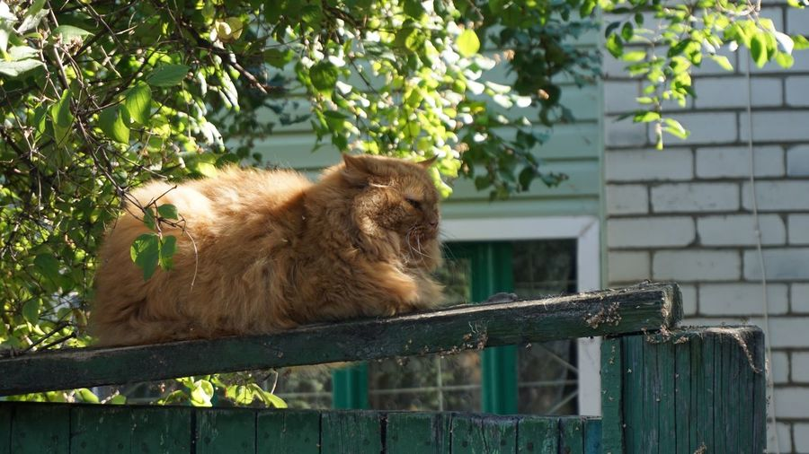 View of a cat against the wall