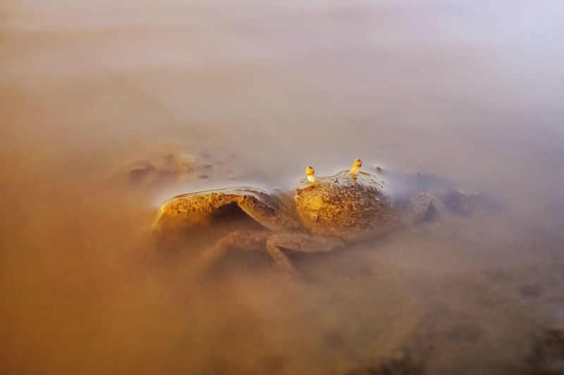 Crab in water.