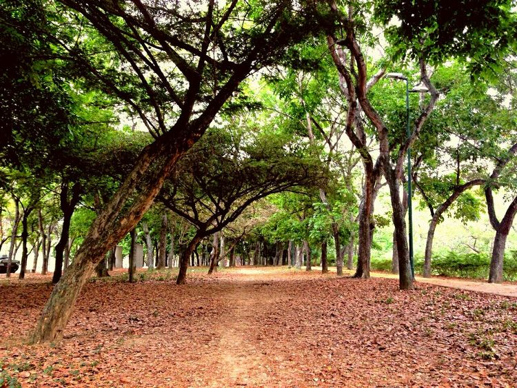 Pathway EyeEm Nature Lover Beatiful Nature Walk This Way Take Me There  Softlight  Cool Mood  Woods