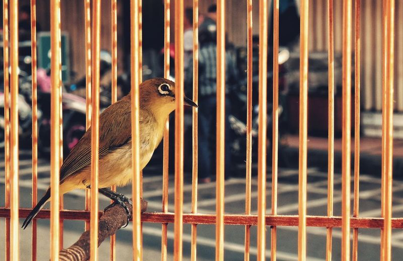 One Animal Animal Themes Cage Animal Wildlife Metal Animals In The Wild Animals In Captivity Close-up No People Day Trapped Reptile Outdoors Pets Nature Mammal Bird