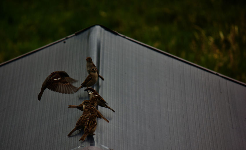 Birds flying against the wall