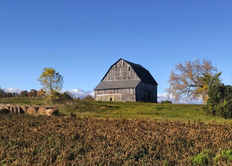 Barn in morning light. Field Farm Barn Agriculture Built Structure Architecture Rural Scene Grass Clear Sky Landscape Horizontal