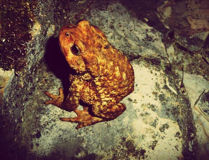 Animals In The Wild One Animal Nature No People Reptile Animal Wildlife Day Animal Themes Outdoors EyeEm Best Shots Eyeemvision Eyeem Photography Frog King